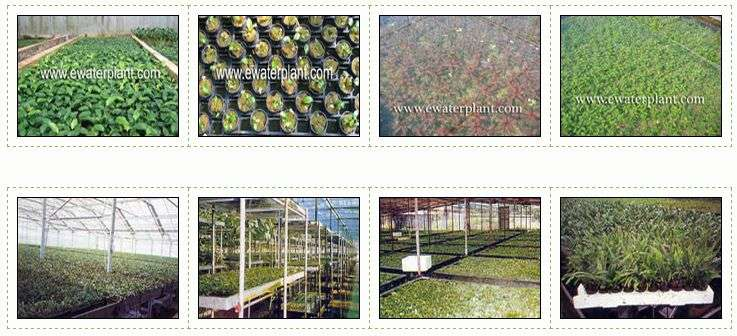 Plant farm photos