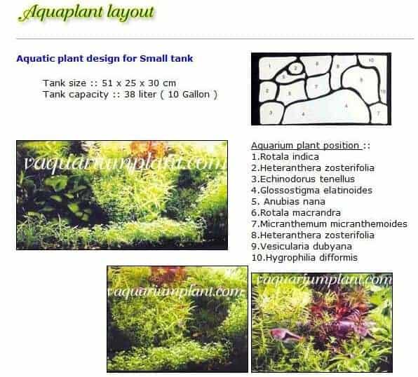 Aquarium-Layout-2