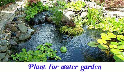 Plants for water garden