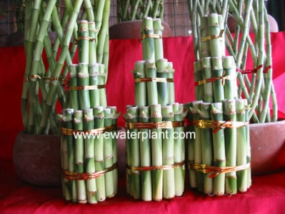Lucky bamboo tower 3 tiers
