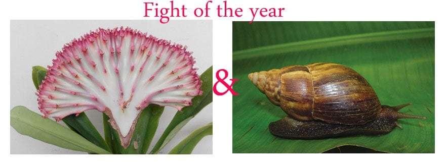 snails attack on Euphorbia lactea