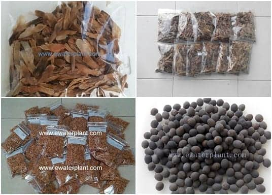 Catalog-Plant-Seed-Thailand