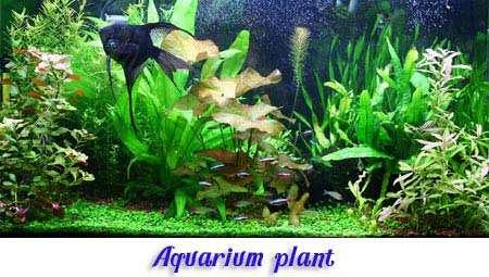 aquarium-plant-logo11
