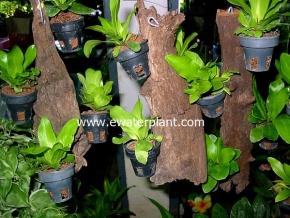 hanging_plant_1