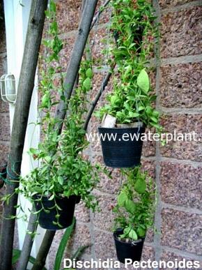 hanging_plant_15