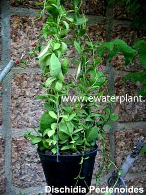 hanging_plant_17