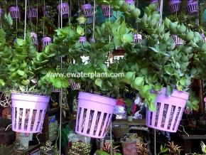 hanging_plant_18