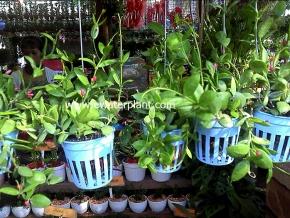 hanging_plant_19