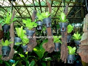 hanging_plant_2