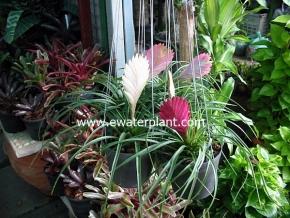 hanging_plant_7
