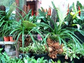 hanging_plant_8