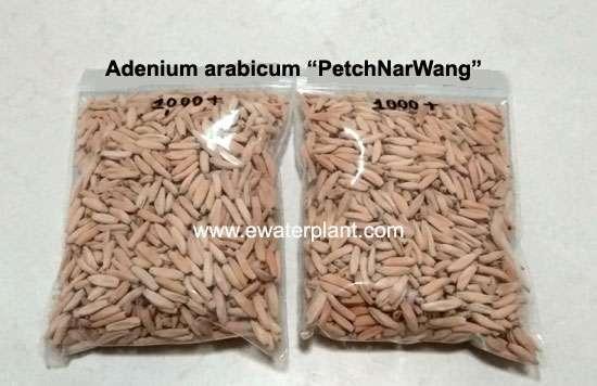 Adenium arabicum seed for sale