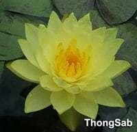 ThongSab
