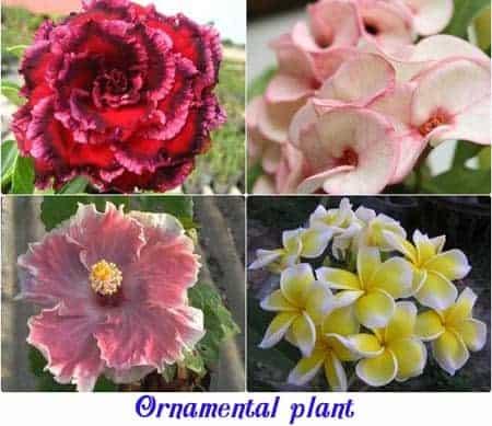Ewaterplant : Resource of aquatic plant and Ornamental plants