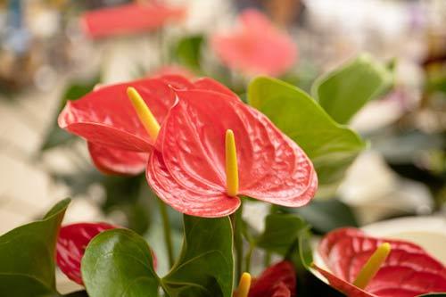 Garden flowers House plant