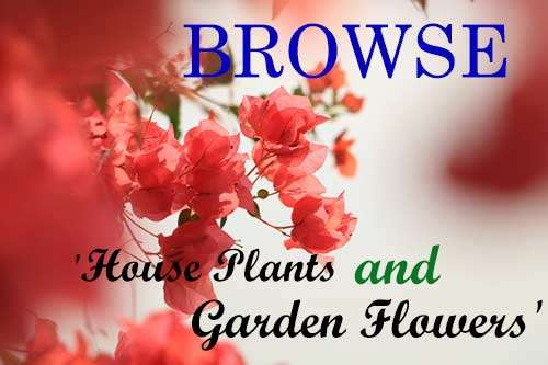 Browse Garden - House plant variety