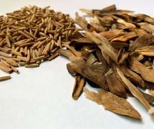 Purchase Plumeria seed