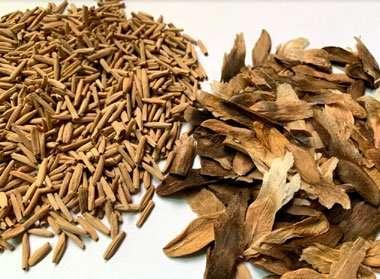 Adenium Plumeria seeds