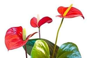 Buy House plant